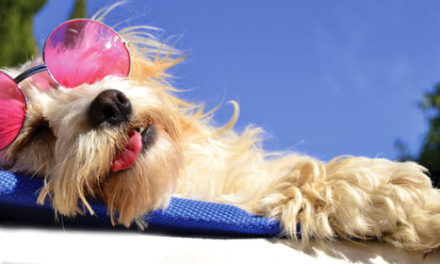 Lounging at Luxury Dog-Friendly Hotels